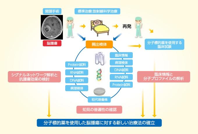 分子標的薬を使用した脳腫瘍に対する新しい治療法の確立