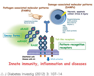J Diabetes Investig (2012) 3: 107–14